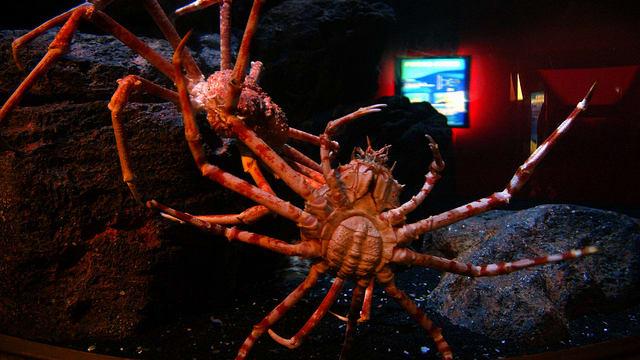 Bí kíp khám phá thuỷ cung SEA Life Bangkok Ocean World 8