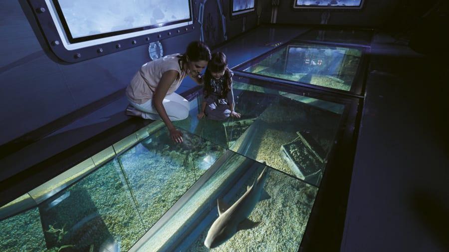 Bí kíp khám phá thuỷ cung SEA Life Bangkok Ocean World 9