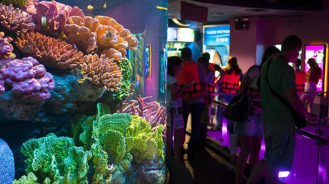 Bí kíp khám phá thuỷ cung SEA Life Bangkok Ocean World 10