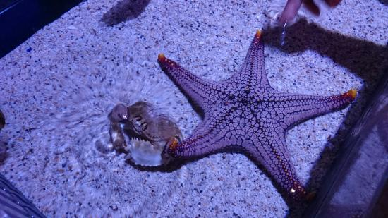 Bí kíp khám phá thuỷ cung SEA Life Bangkok Ocean World 14
