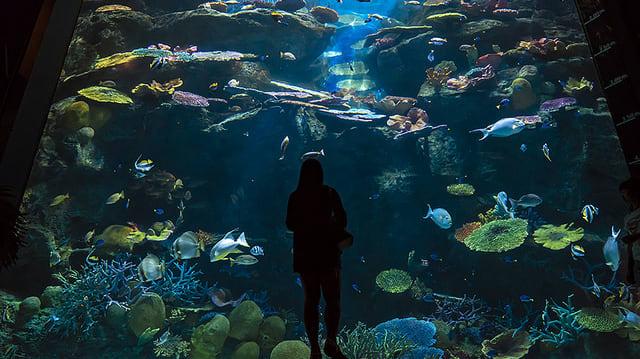 Bí kíp khám phá thuỷ cung SEA Life Bangkok Ocean World 17