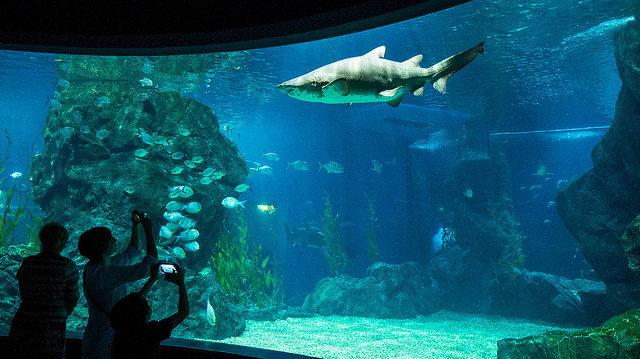 Bí kíp khám phá thuỷ cung SEA Life Bangkok Ocean World 18