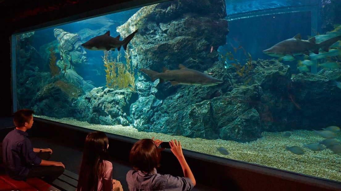 Bí kíp khám phá thuỷ cung SEA Life Bangkok Ocean World 19