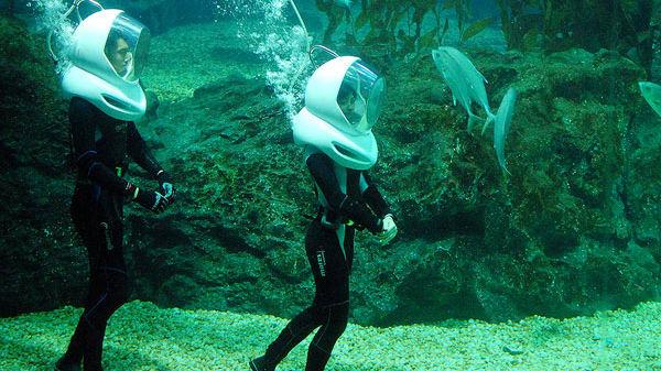 Bí kíp khám phá thuỷ cung SEA Life Bangkok Ocean World 24