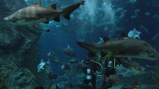 Bí kíp khám phá thuỷ cung SEA Life Bangkok Ocean World 25