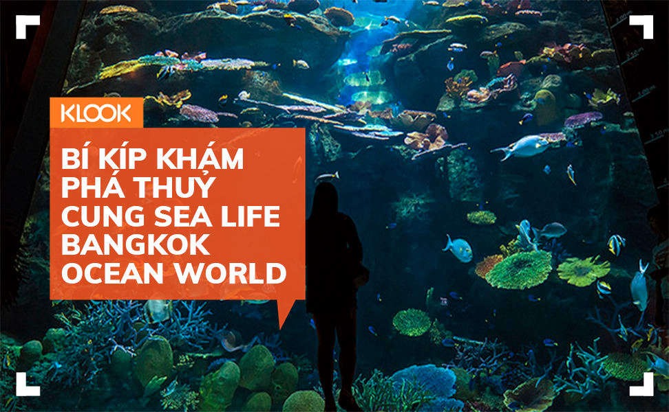 Bí kíp khám phá thuỷ cung SEA Life Bangkok Ocean World 1