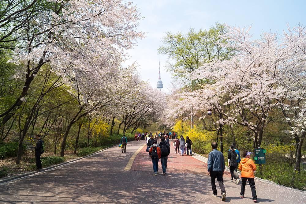tháp N Seoul nhìn từ công viên Namsan