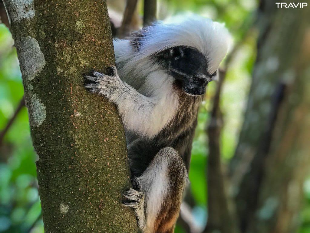 xem vượn tại singapore zoo trong lịch trình đi singapore dịp 30/4 cho nhóm bạn thân