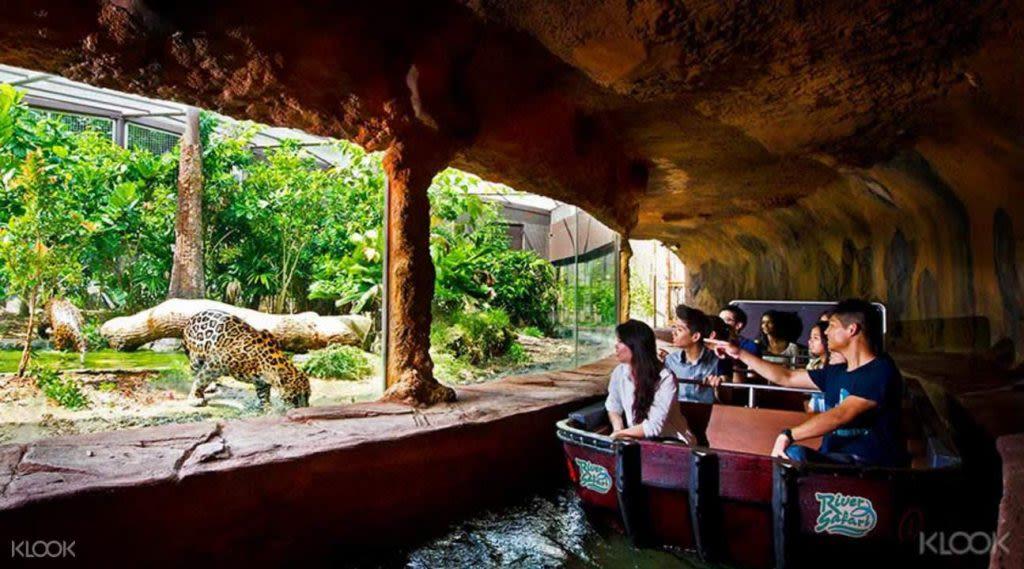 xem báo hoa mai ở river safari trong lịch trình đi singapore dịp 30/4 cho gia đình