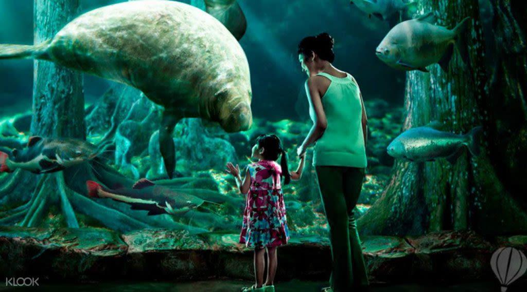 xem dugong ở river safari trong lịch trình đi singapore dịp 30/4 cho gia đình