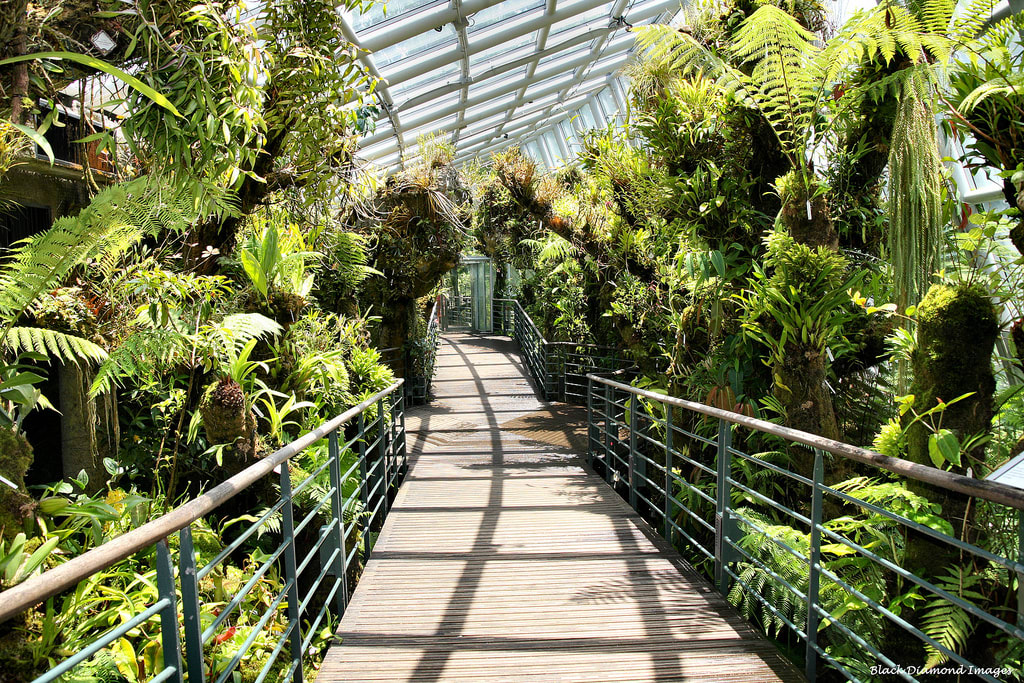 cảnh bên trong botanic gardens trong lịch trình đi singapore cho nhóm bạn