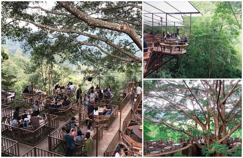 ghé The Giant Treehouse Cafe là một trong những bí kíp du lịch Chiang Mai tiết kiệm