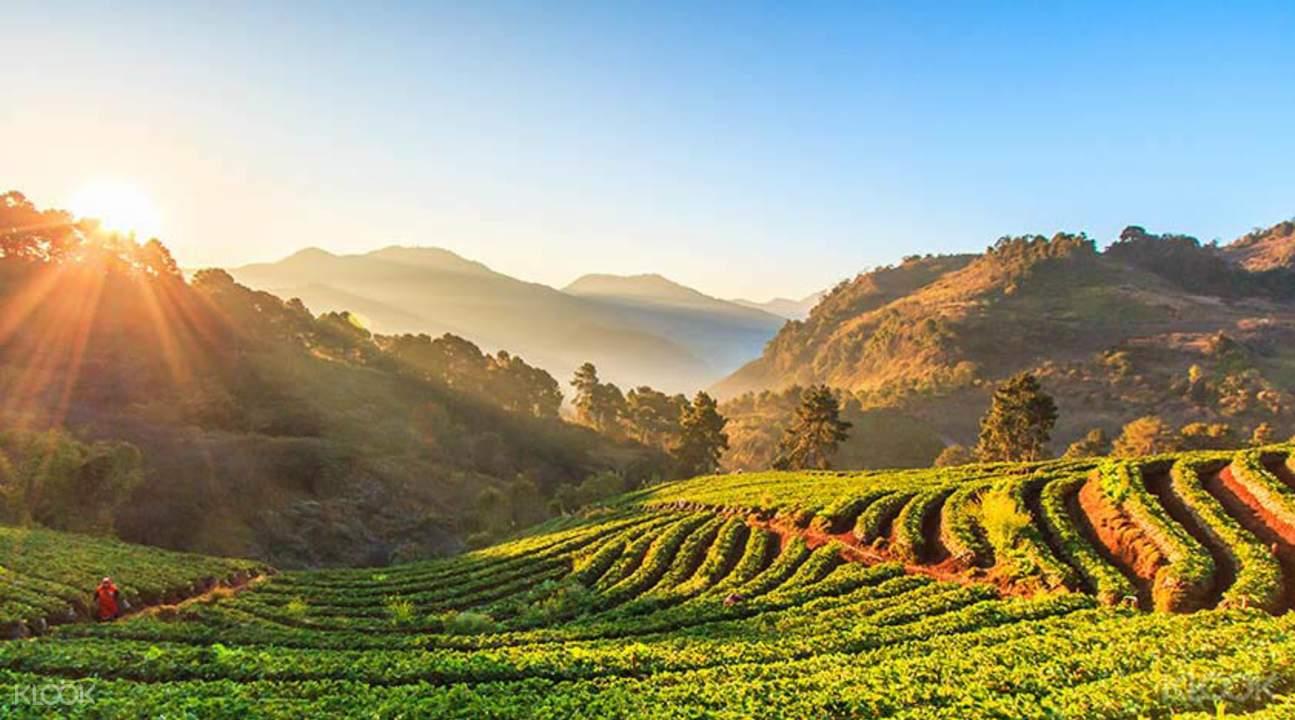 thăm công viên quốc gia Doi Inthanon là một trong những bí kíp du lịch Chiang Mai tiết kiệm