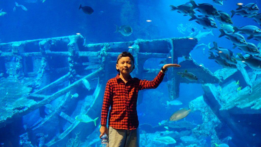 Lịch trình du lịch tự túc Singapore 4 ngày cho gia đình: thủy cung ở sentosa