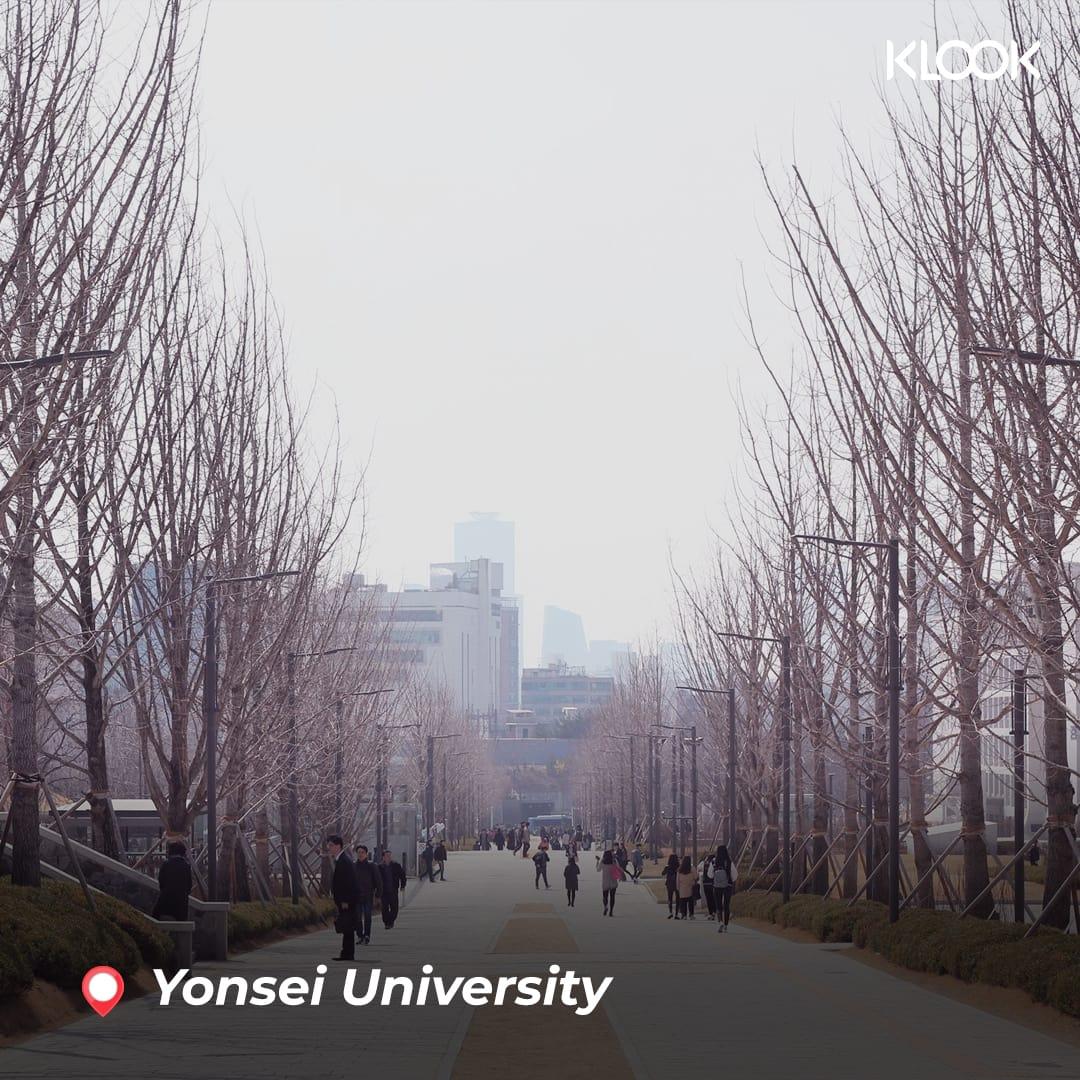 hàng cây tại yonsei university