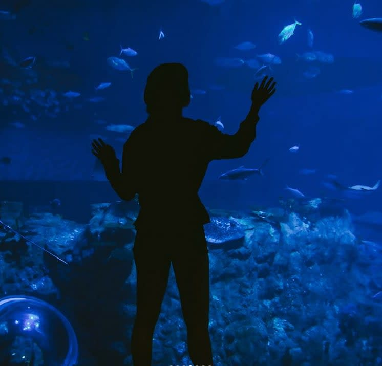 chiêm ngưỡng thủy cung ocean park