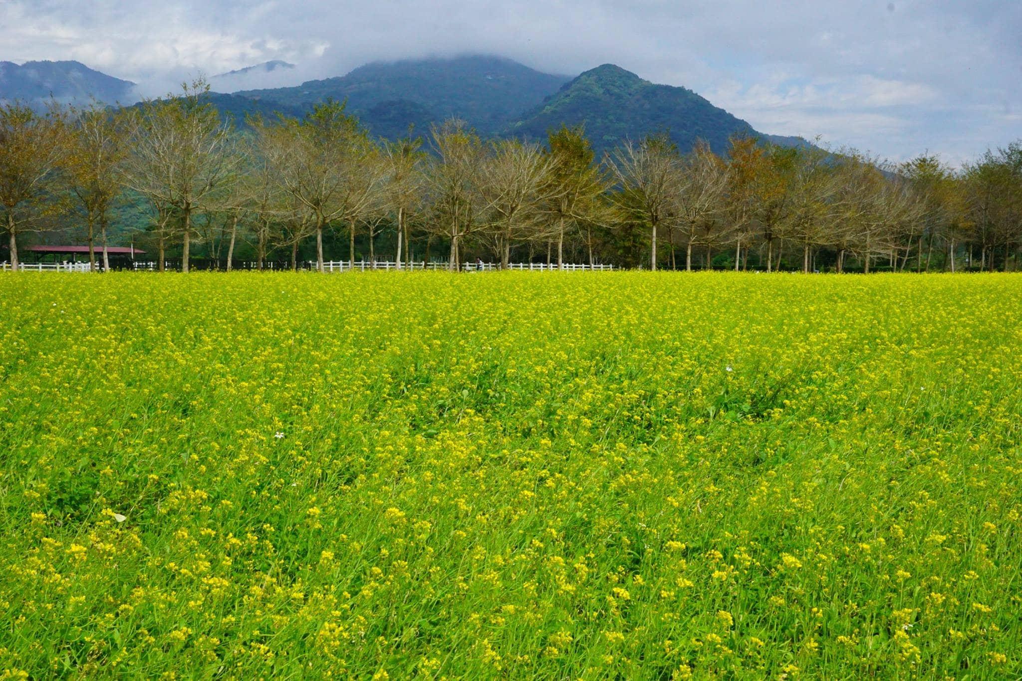 khám phá thiên nhiên đài loan: ruộng cải ở cẩn đinh