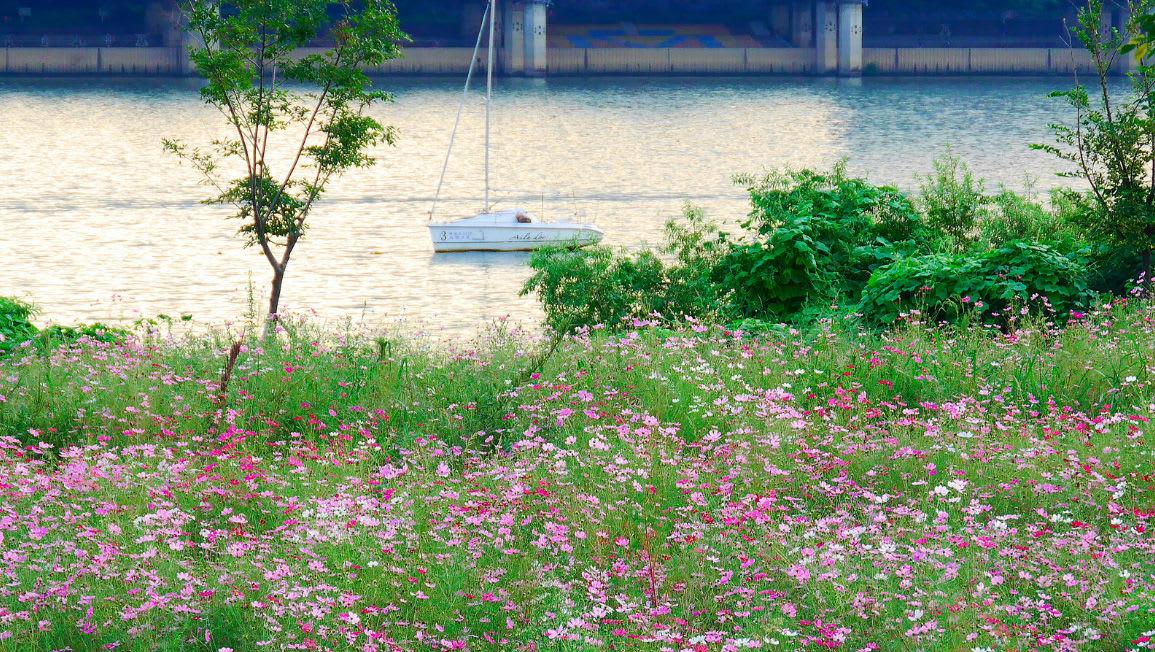 ngắm sông hàn từ inchon hangang park