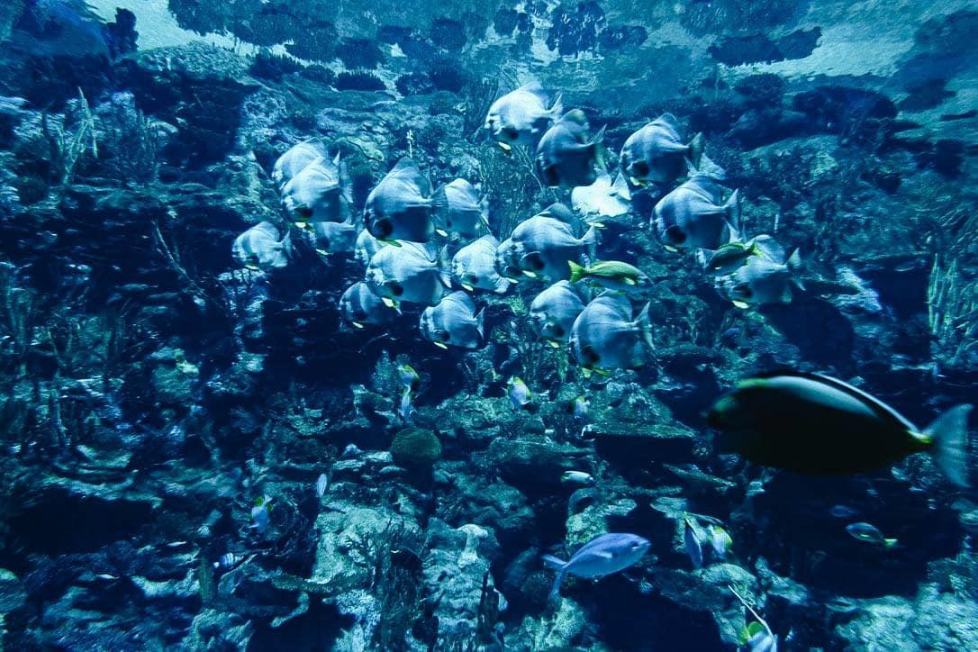 tham quan thủy cung ocean park
