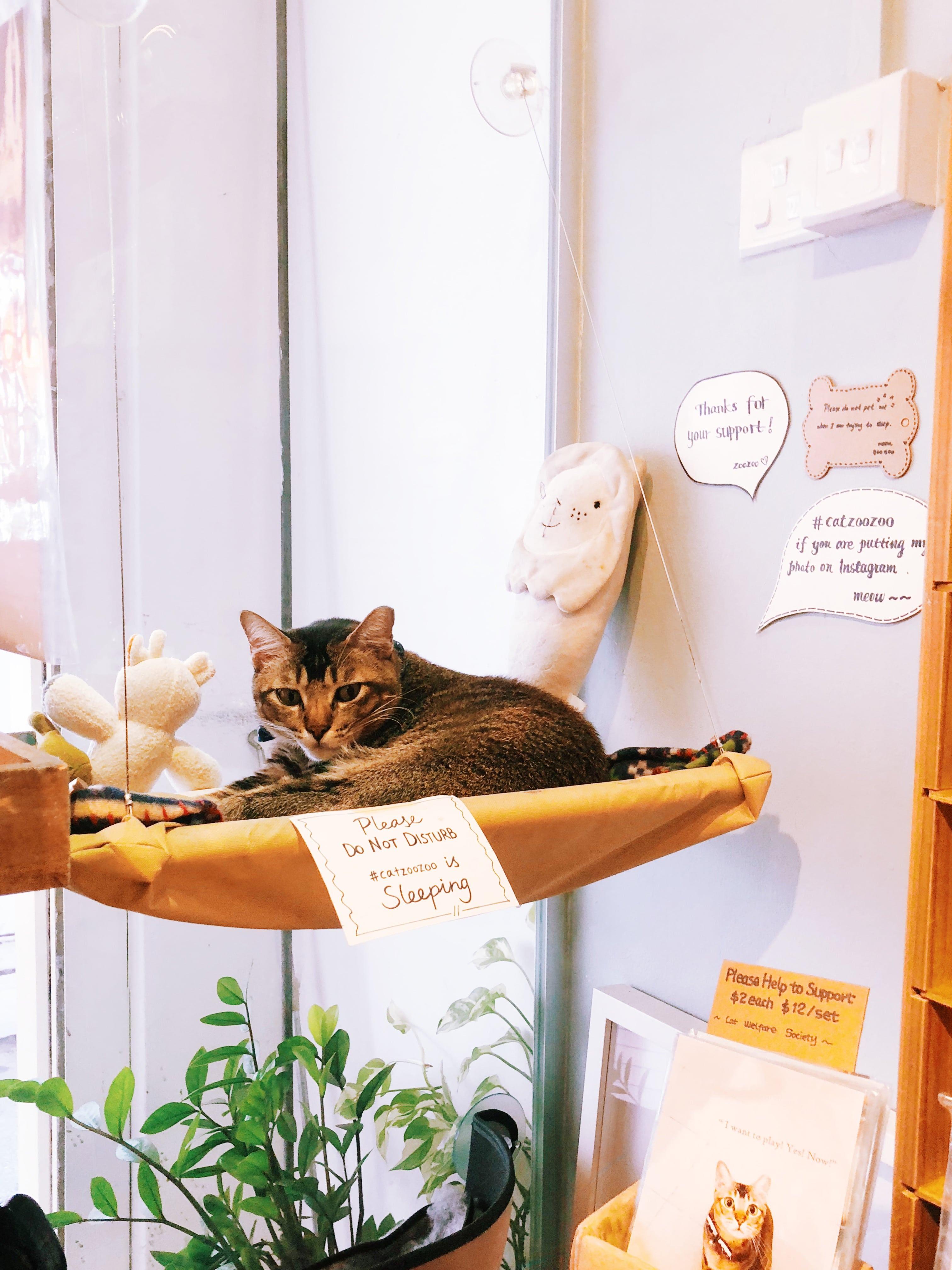 chú mèo tại cat socrate