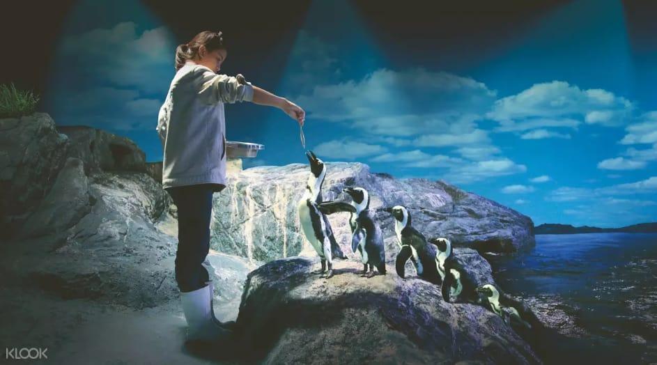 cho chim cánh cụt ăn tại sea life bangkok ocean world