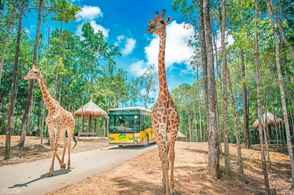 hươu cao cổ tại vinpearl safari phú quốc