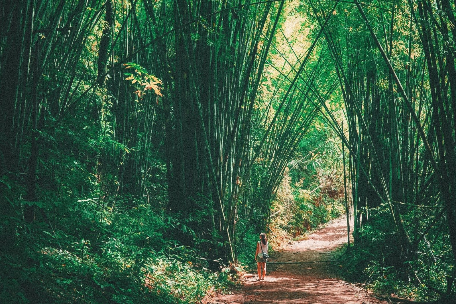 rừng tre tại vườn quốc gia khao sok