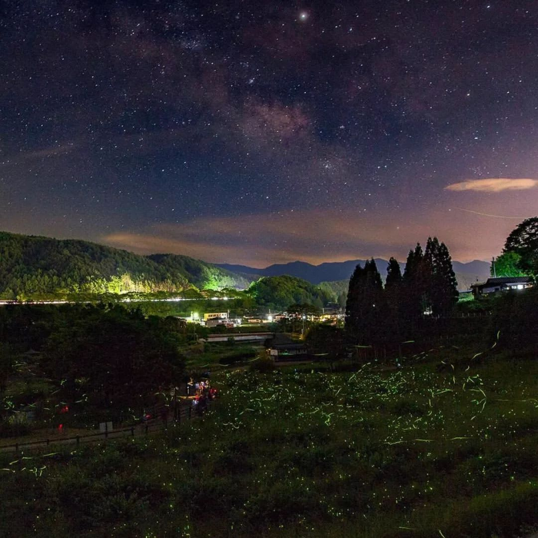 ngắm đom đóm tại công viên fireflies nursery rhymes