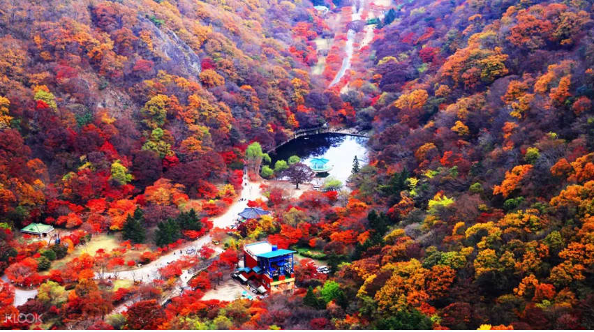 rừng thu lá đỏ hàn quốc