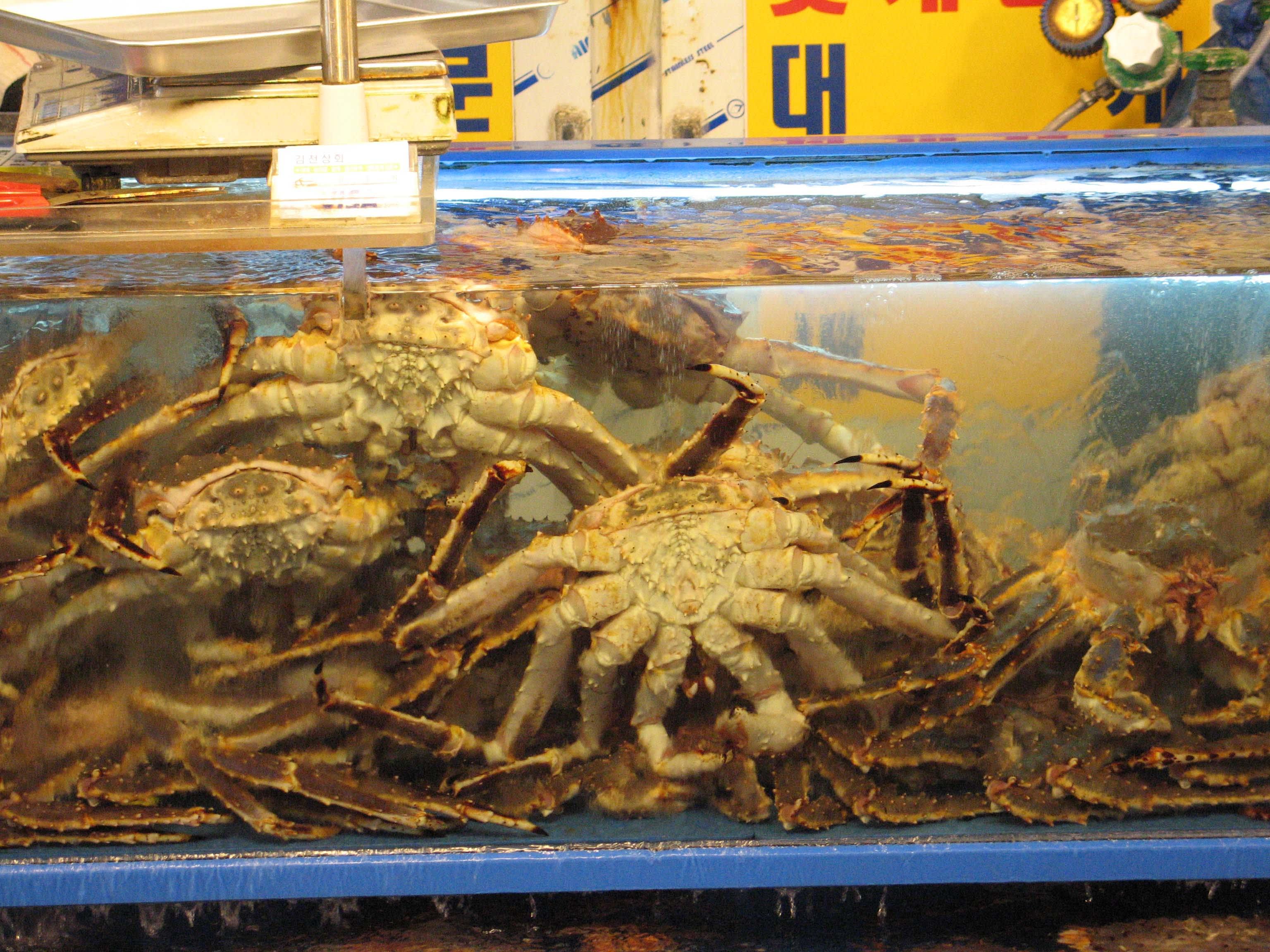 king crab ở chợ hải sản noryangjin