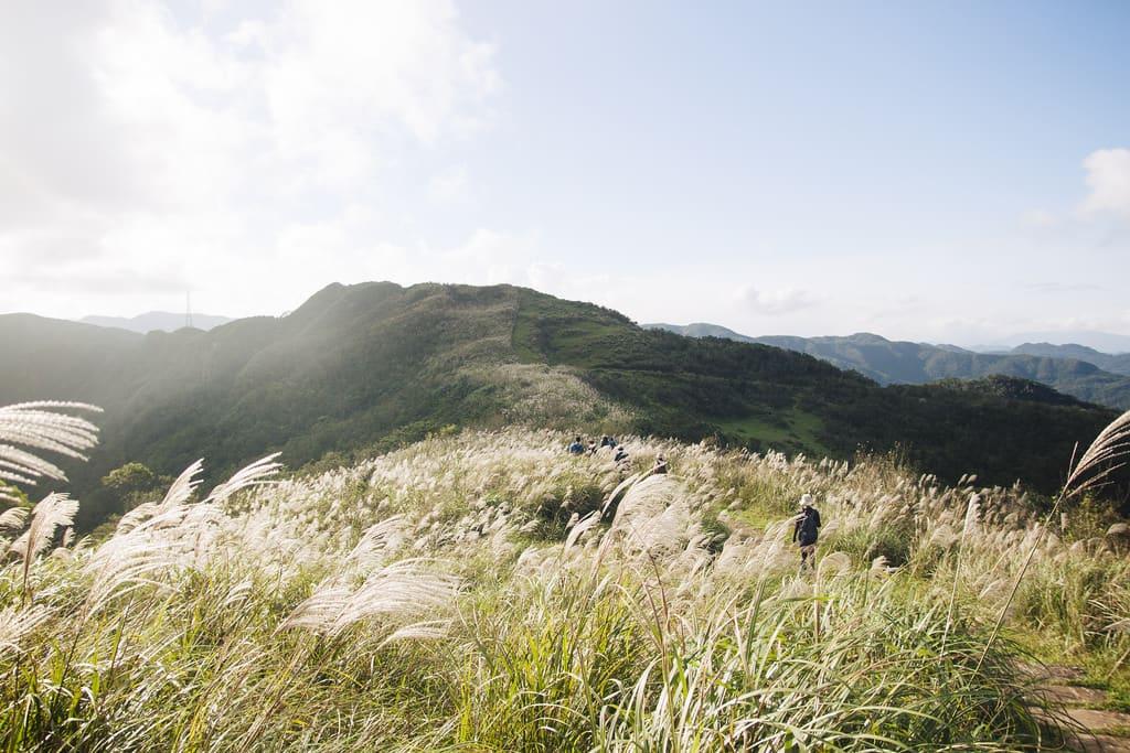 cánh đồng cỏ bạc tại đường mòn lịch sử caoling