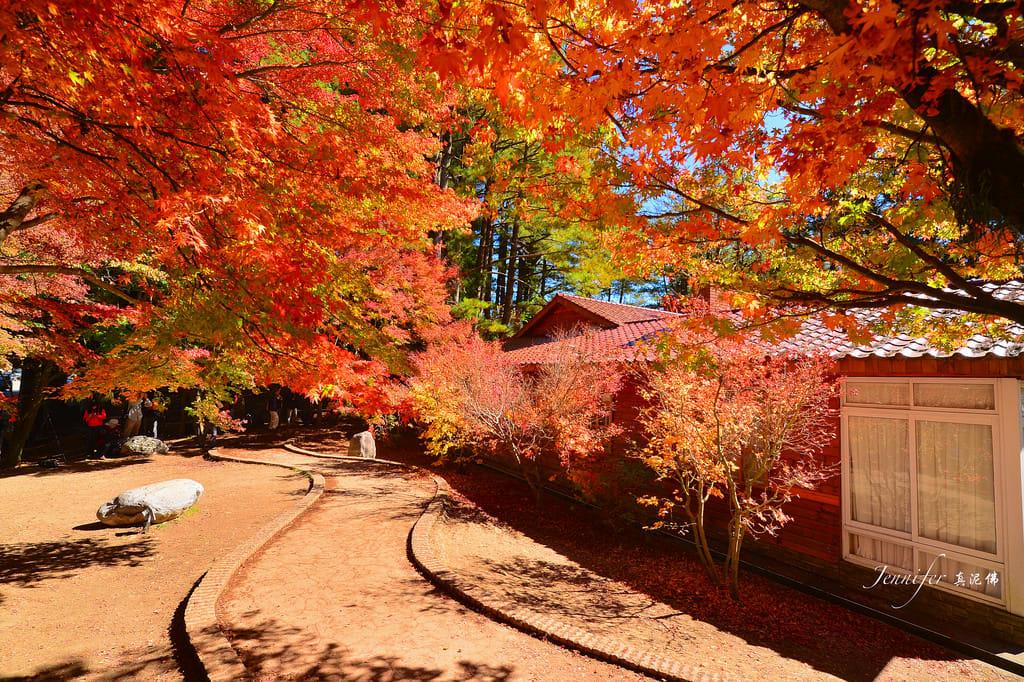 bầu trời rợp lá đỏ tại trang trại fushoushan