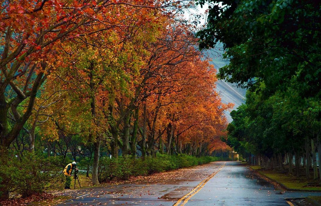 mùa thu ở hồ shihmen, đào viên