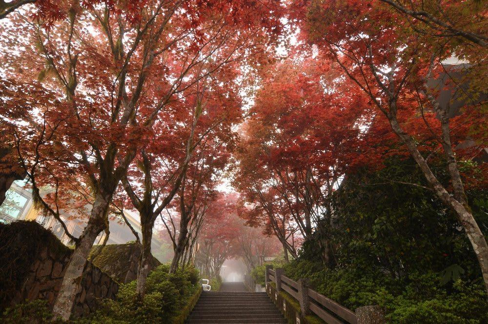 vườn quốc gia dương minh sơn vào một buổi sáng mùa thu nhiều sương