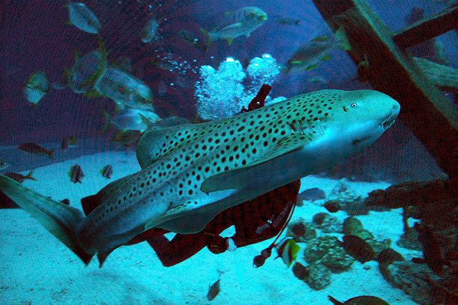 cá nhám tại S.E.A Aqarium