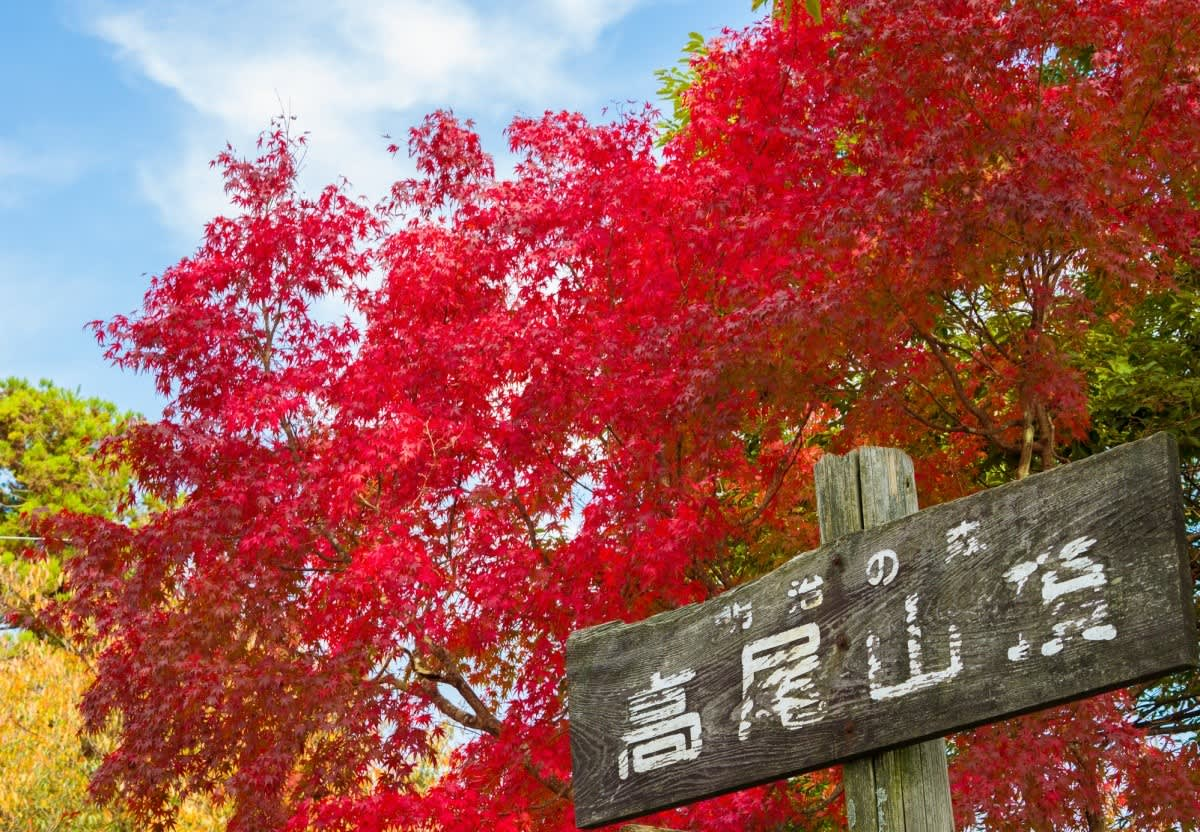 lá phong tại núi takao