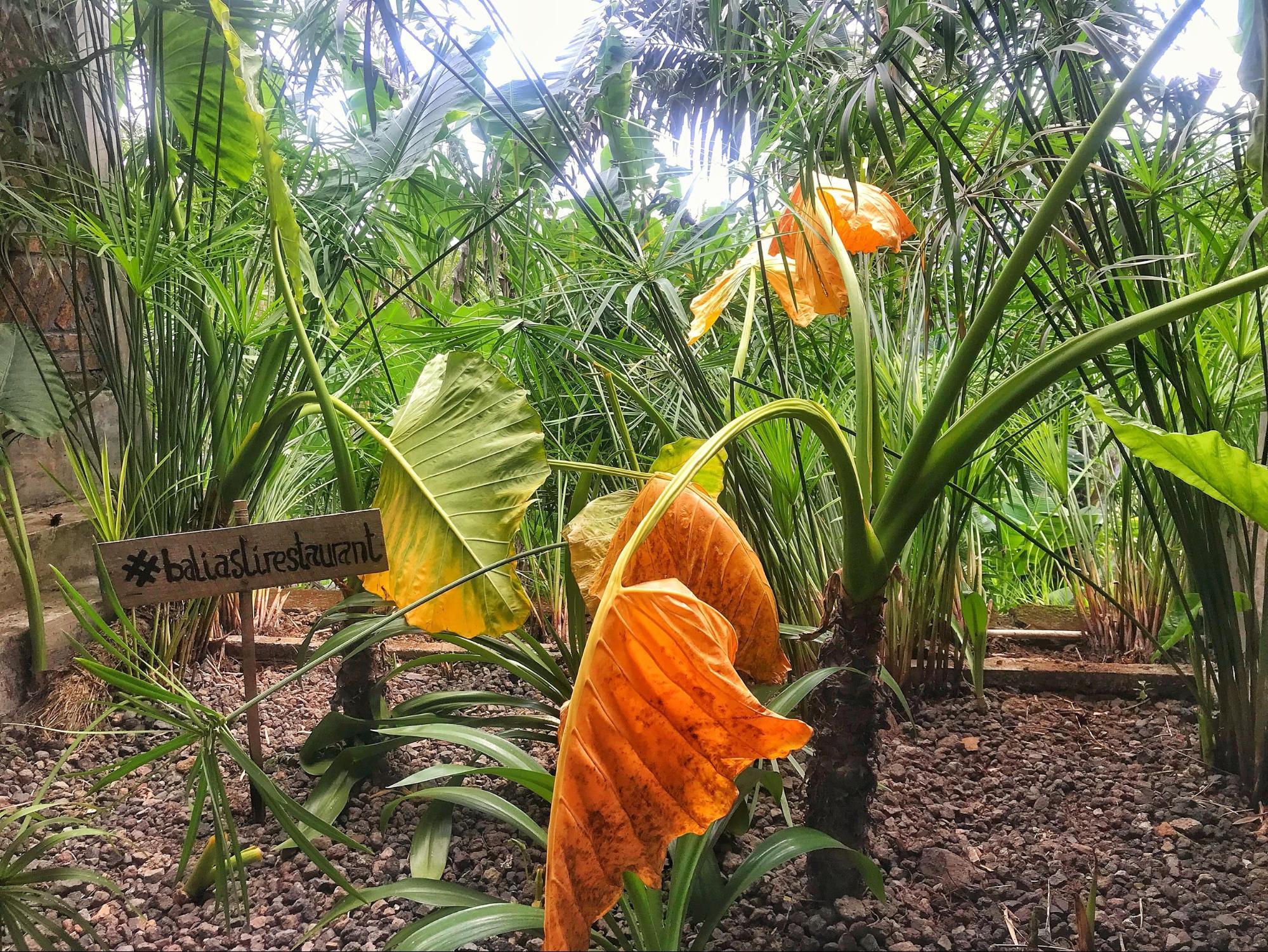 cây cảnh trong nhà hàng Bali Asli