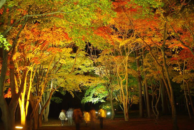 công viên miharashi về đêm