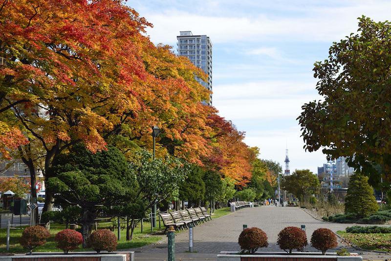 hàng cây lá thu tại công viên odori