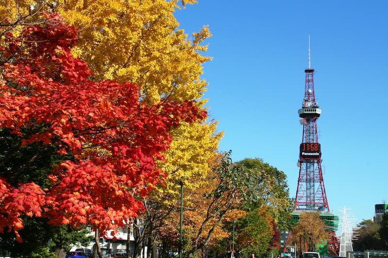 lá thu vàng và đỏ tại công viên odori