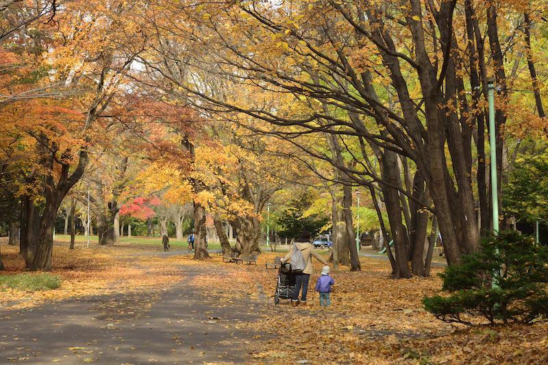 hàng cây lá ngân hạnh tại đền thờ hokkaido