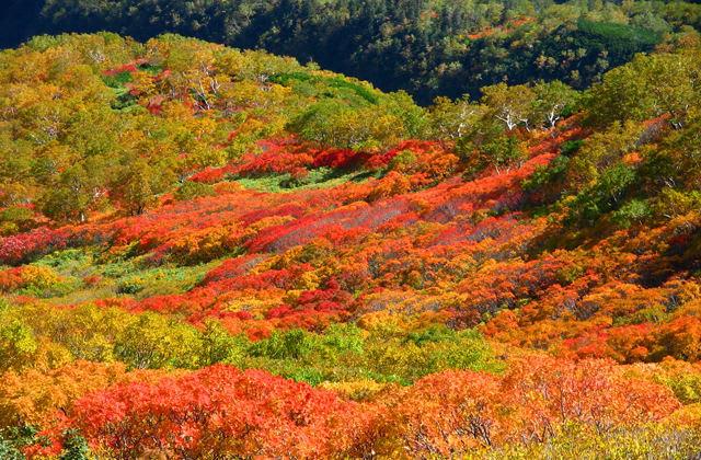 rừng lá thu tại hẻm núi Sounkyo
