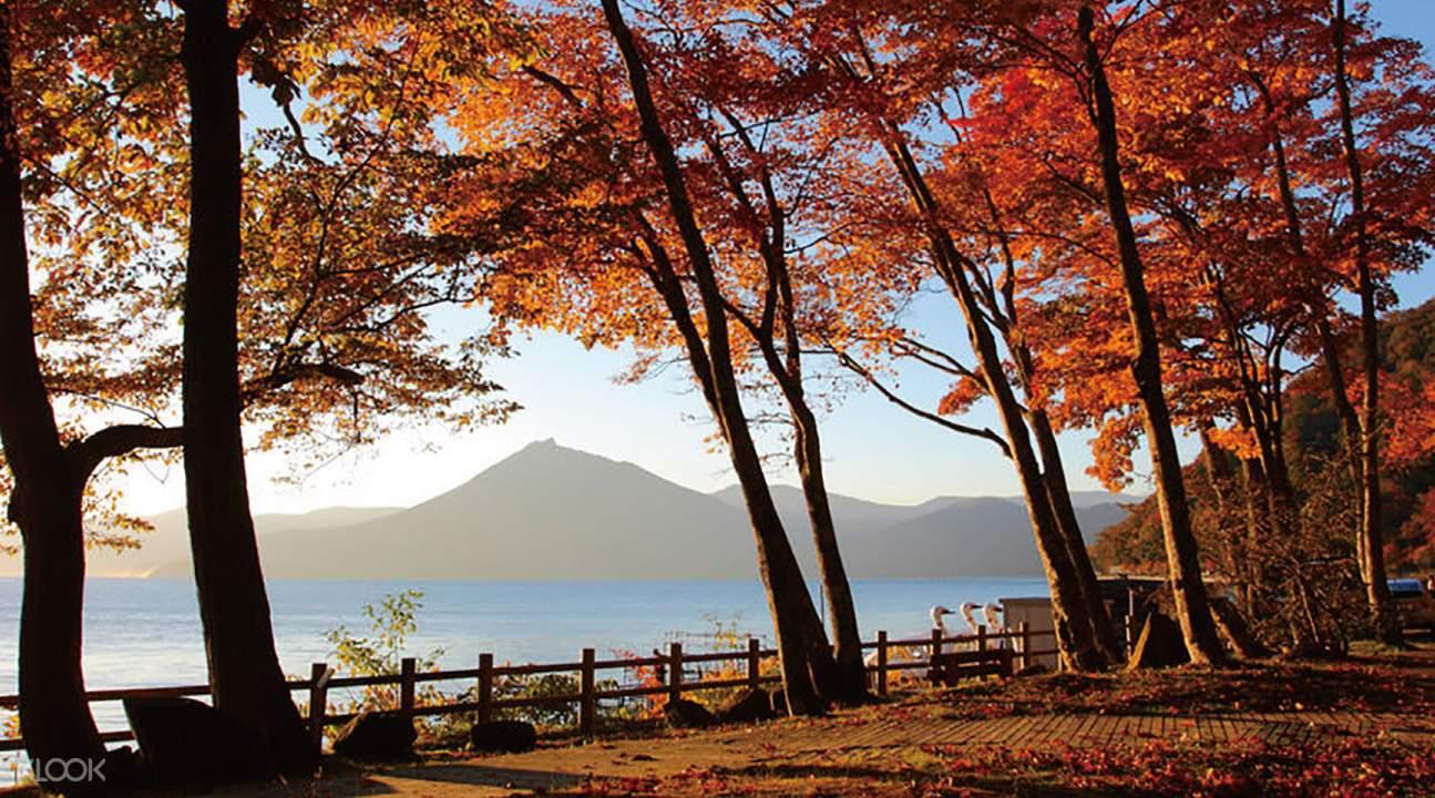 lá thu đỏ tại hồ shikotsu