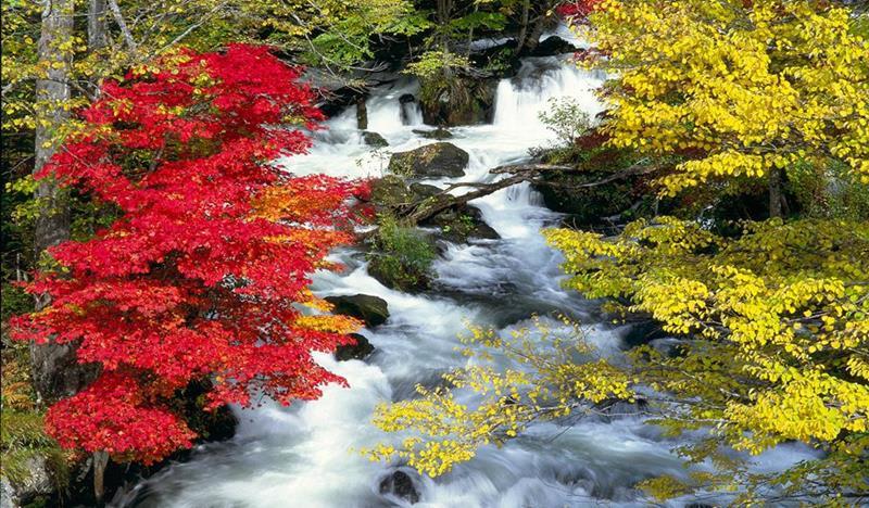 lá thu đỏ ở hồ Akan