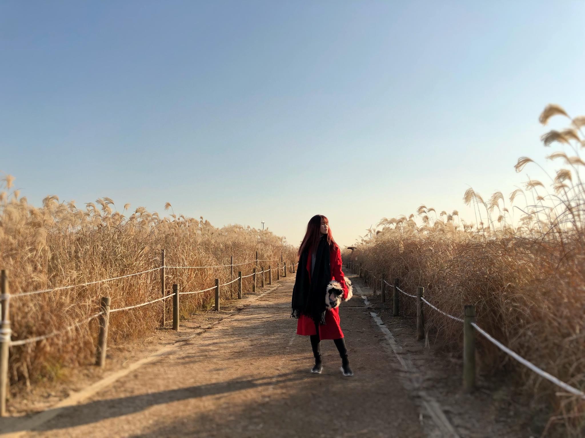cánh đồng cỏ lau tại công viên haneul