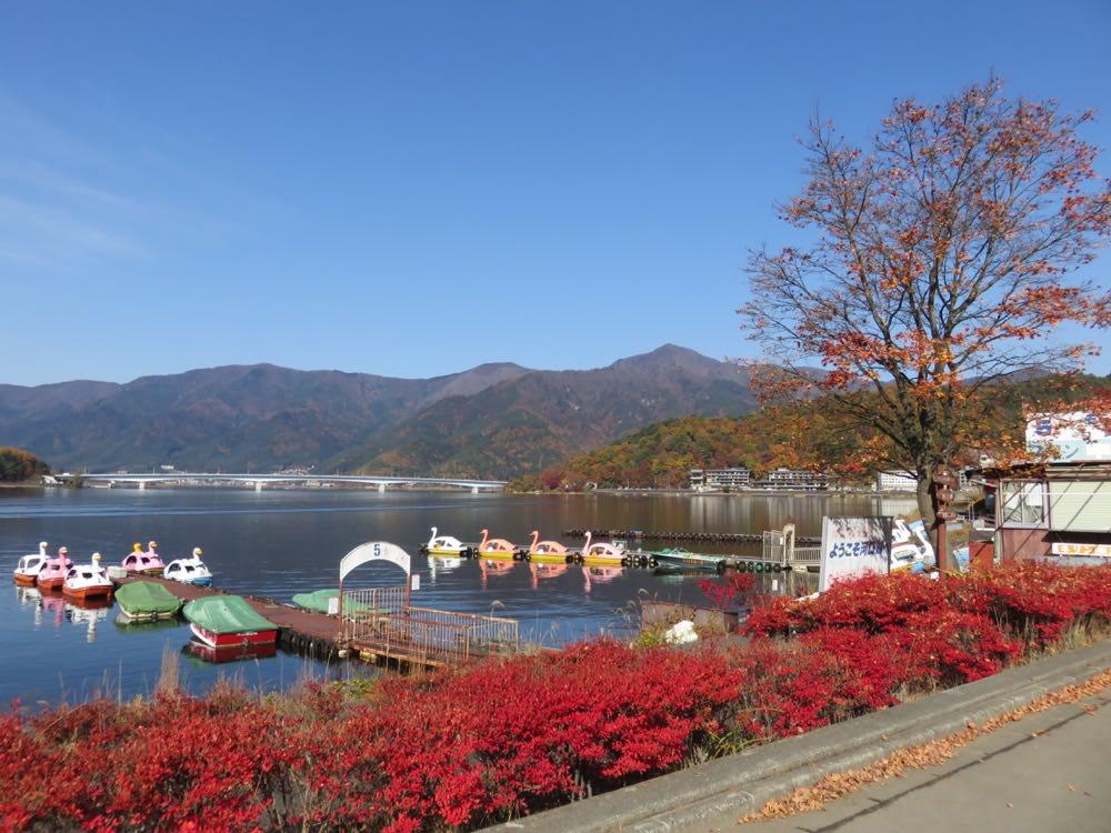 lá thu đỏ cạnh hồ kawaguchi