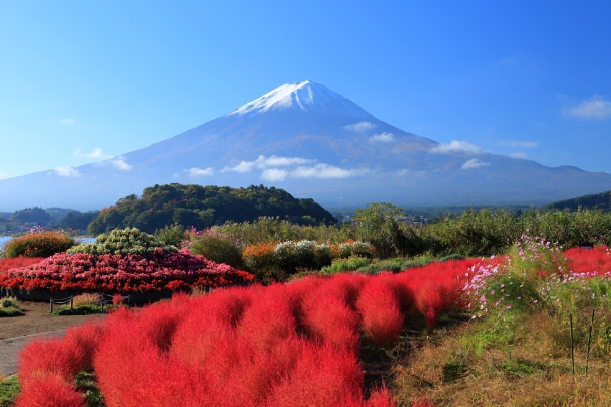 núi phú sĩ nhìn từ công viên oishi