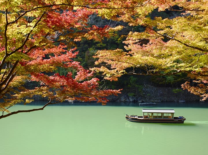 con thuyền trên sông dưới tán lá thu đỏ vùng kansai