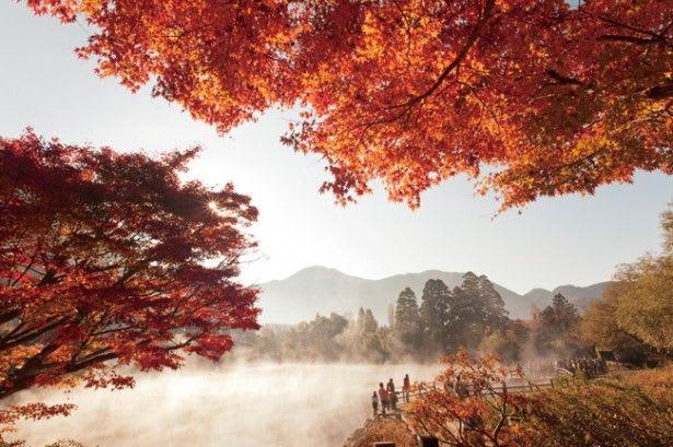 lá thu đỏ tại kyushu