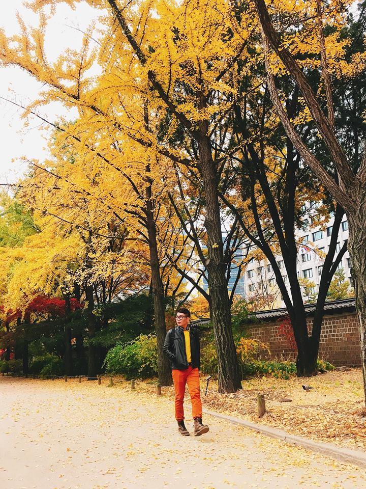 cây lá vàng tại cung điện Deoksugung
